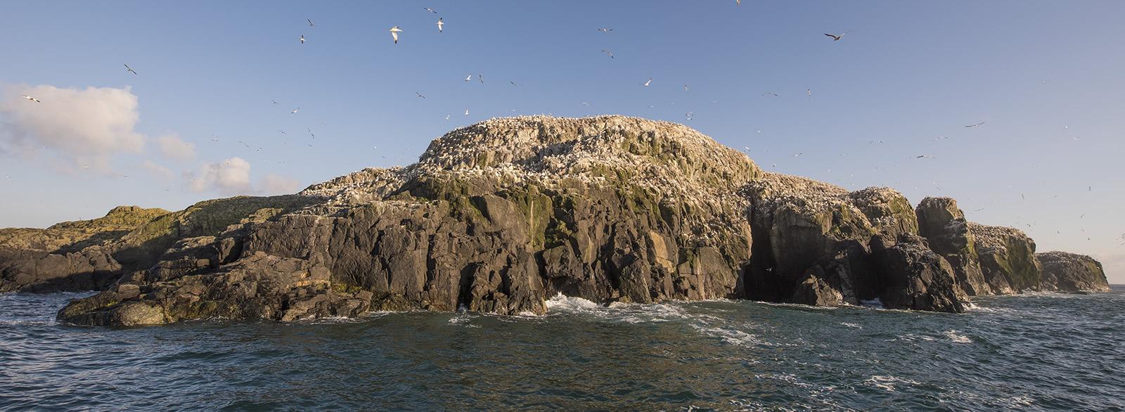 island-birds3