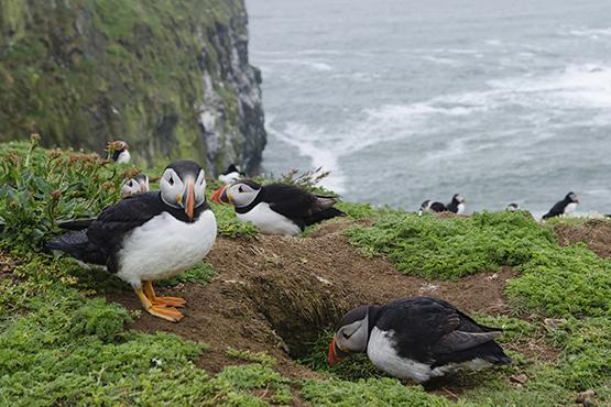 Skomer Features In Lonely Planet Guide